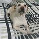 Pet Sitter Kelly Cristina Passeadora e Cuidadora de cachorros e bichinhos Atendimento Domiciliar
