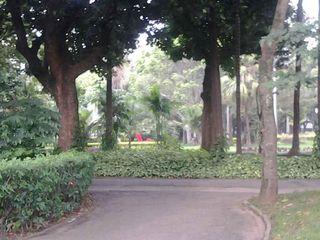 Parque da Luz by Edson Alves Carmo
