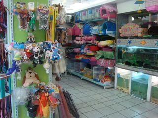 Baby Dog Pet Shop & Clínica Veterinária - Meireles by Baby Dog