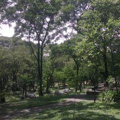 Parque Municipal São Domingos by Edson Hiromitsu Tobinaga