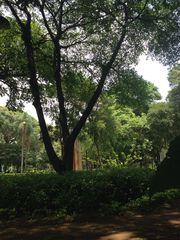 Parque da Luz by Ronaldo Marques