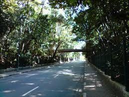 Parque Trianon (Tenente Siqueira Campos) by Priscila Bulbarelli Ferreira