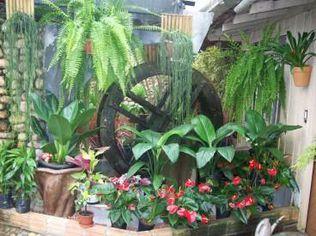 Foto de  Verde Flora Floricultura - Mercês enviada por Rodrigo Ludwig em 21/08/2010