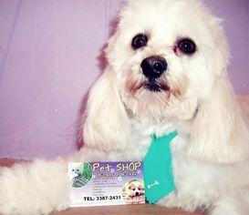 Foto de  Pet Shop Bichos e Bichos enviada por Pet Shop Bichos E Bichos em