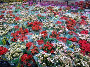 Foto de  Shopping Garden Sul enviada por Thiago Ganzarolli Da Silva em 03/09/2011