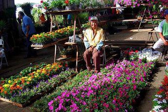 Foto de  Ceagesp enviada por Juliana Couceiro em 25/09/2012