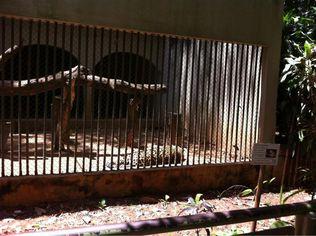 Foto de  Bosque Municipal enviada por Rafael Siqueira em