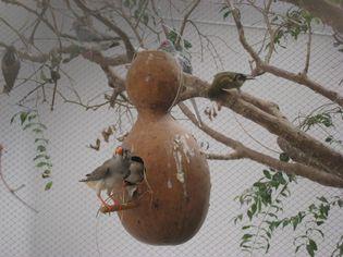 Foto de  Paraíso dos Pássaros enviada por Rodrigo Ludwig em 30/05/2010