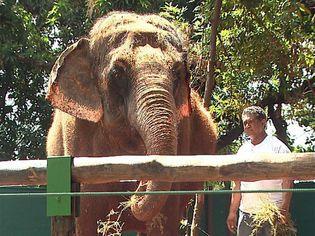 Foto de  Bosque e Zoologico Municipal Dr Fabio de Sa Barreto enviada por Andreia Pereira Da Silva em 23/01/2015