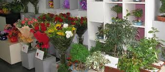 Foto de  Ikebana Floricultura - Rio Vermelho enviada por Caroline Monteiro em