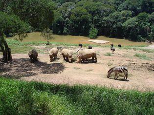 Foto de  Zooparque Itatiba-Sp enviada por John Lima em 12/02/2012