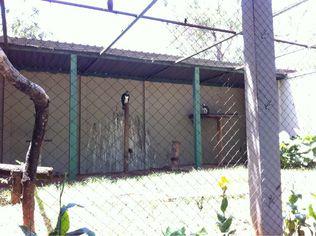 Foto de  Bosque Municipal enviada por Rafael Siqueira em 02/01/2011