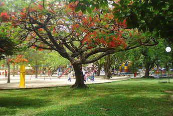 Foto de  Parque da Jaqueira Recife enviada por Silvannir Jaques em 12/02/2015