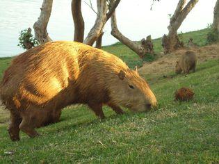 Foto de  Parque Zoológico de Sapucaia do Sul enviada por Rodrigo em