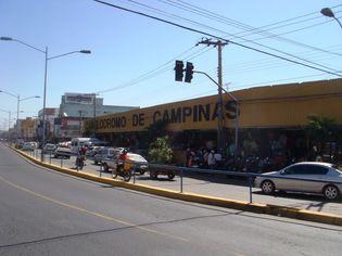Foto de  Camelódromo de Campinas - Setor Campinas enviada por DARCILUCY DA MATTA em