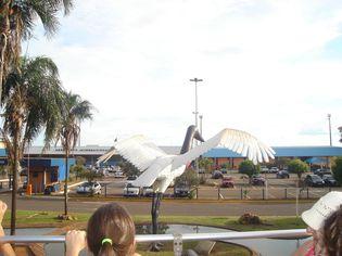 Foto de  Aeroporto Internacional de Campo Grande enviada por Daniel Catapane em 28/01/2012