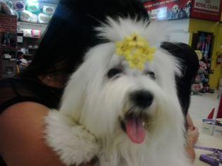 Foto de  Pet Center Marginal - Campinas enviada por Milton De Abreu Cavalcante em