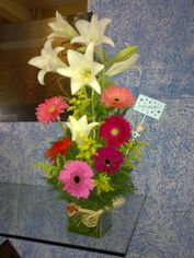 Foto de  D.L. Floricultura e Jardinagem enviada por Meire Tonello em