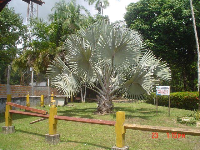 jardim-casa-das-plantas-7259466329578414.jpg